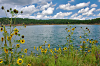 Morphy Lake and sunflowers
